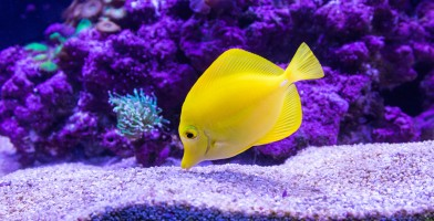An in-depth review of the best aquarium lights available in 2019.