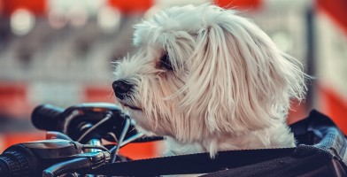 An in-depth review of the best dog bike baskets available in 2019.