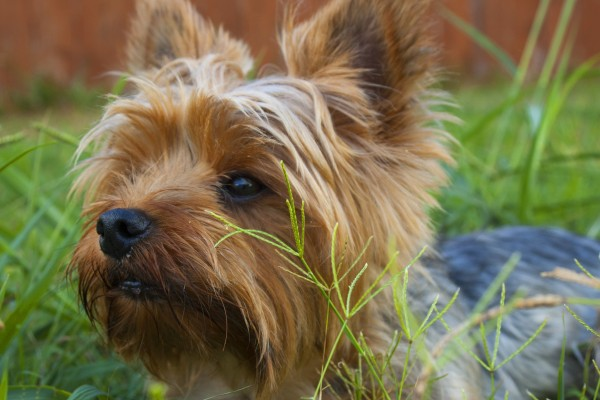 An in-depth review of the best flea treatments for dogs reviewed in 2019.