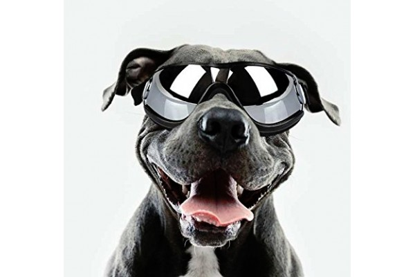 An in-depth review of the best dog sunglasses available in 2019.