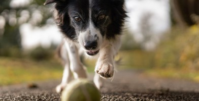 An in-depth review of the best dog ball launchers available in 2019.