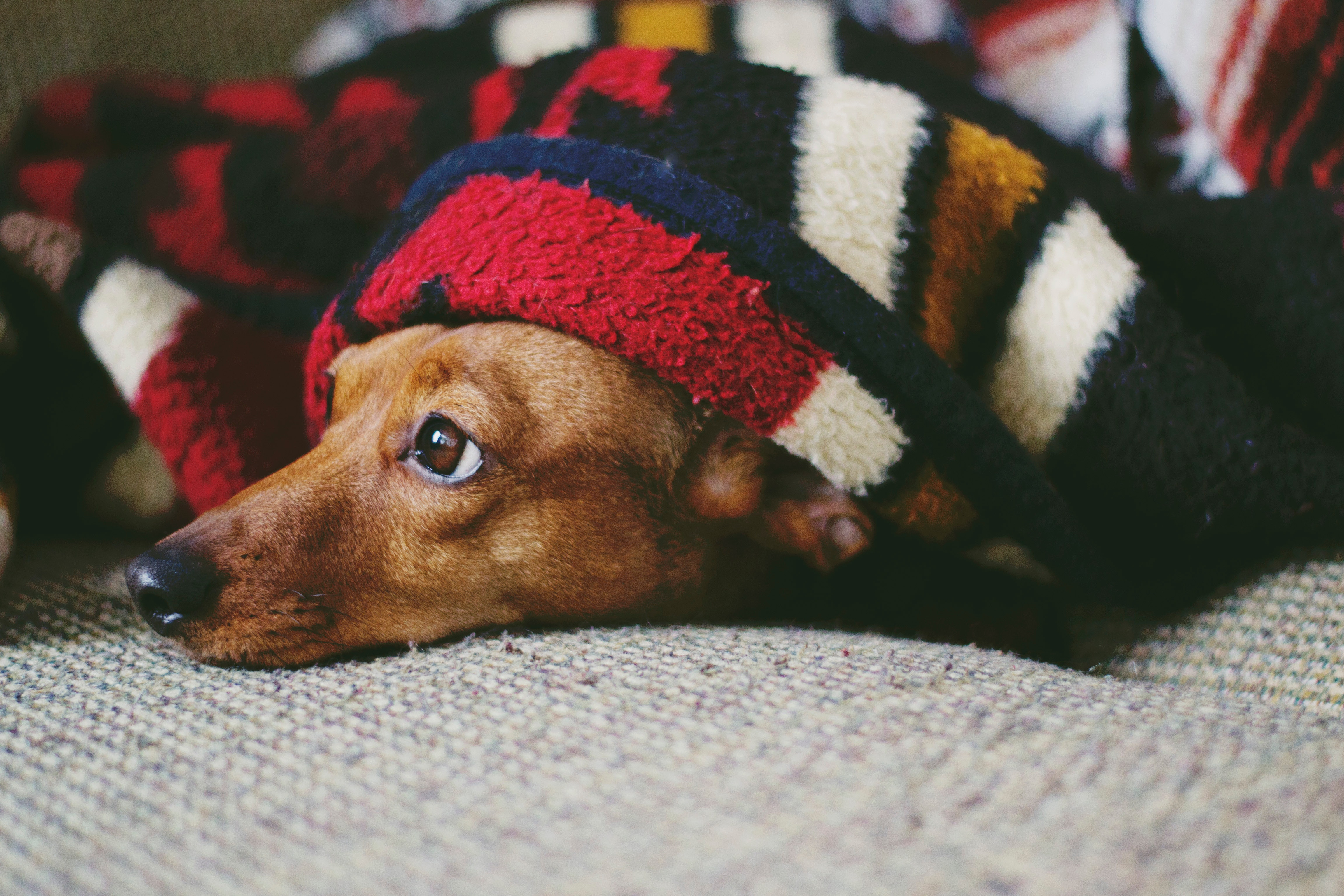 An in-depth review of the best blankets for dogs available in 2019.