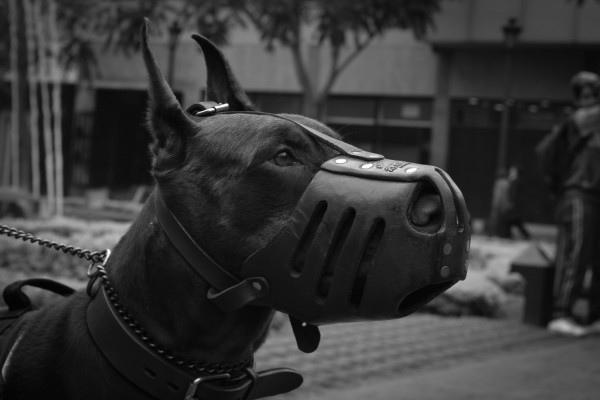 An in-depth review of the best dog muzzles available in 2019.