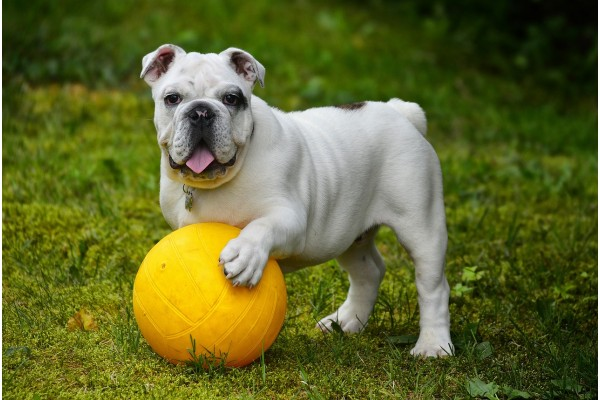 An in-depth review of the best dog balls available in 2019.