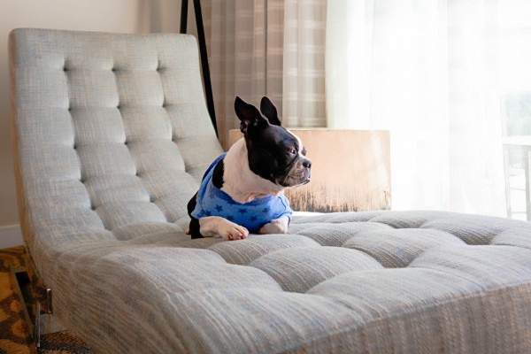 An in-depth review of the best elevated dog beds available in 2019.