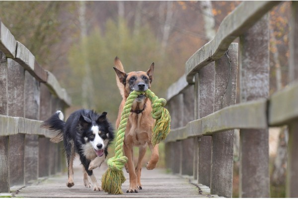 An in-depth review of the best dog rope toys available in 2019.
