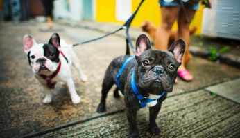An in-depth guide on what to expect as first-time dog owner.