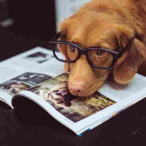 Dog-with-Glasses