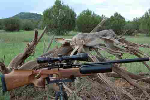 about hunting rifles