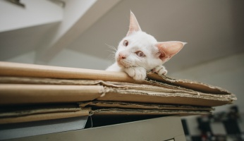 An in-depth guide on how to build a cat tree.