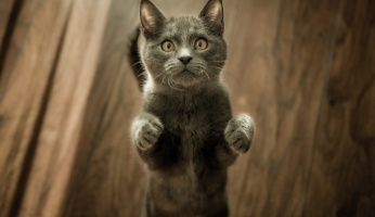 An in-depth guide on cat zoomies and other interesting cat behavior.