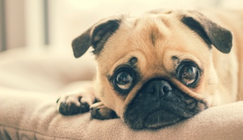 An in-depth guide on how to recognize and treat dog anxiety.