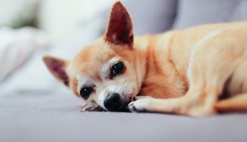 An in-depth guide on cutting dogs nails.