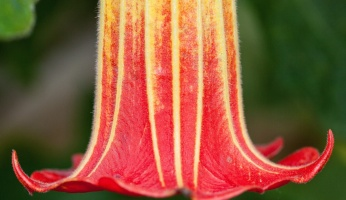 An in-depth guide to the 16 most poisonous plants.