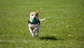 An informative look at heartworm in dogs.