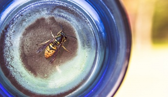 An in-depth guide on how to make DIY wasp traps.