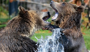 An in depth guide for how to survive a bear attack.