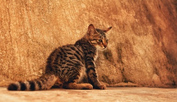 An in-depth review on how to stop cat scratching.