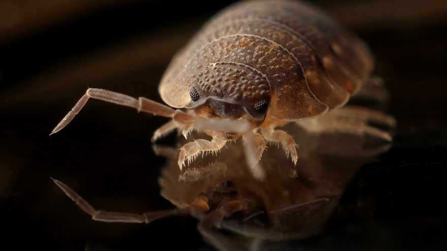 An in-depth guide on different bedbug treatments to try.