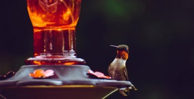 An in-depth guide to the bets hummingbird feeders of 2018.