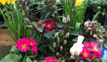 An in-depth guide on the do's and don'ts of container gardening