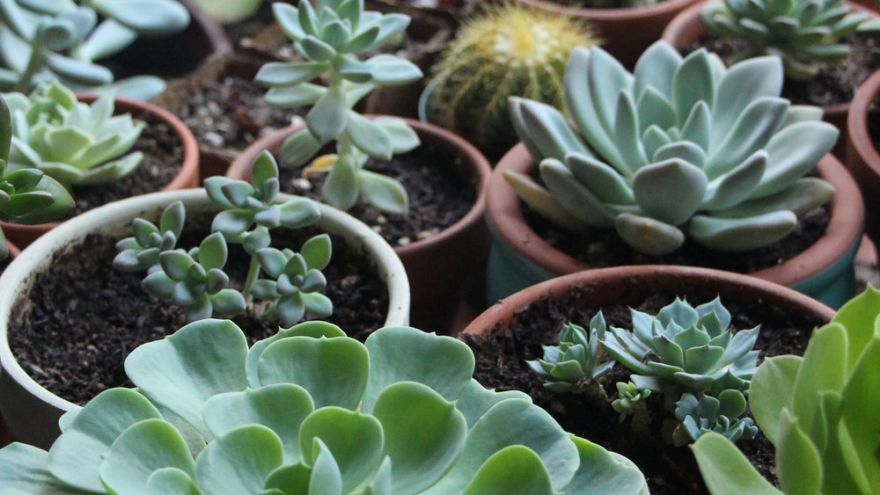 An in-depth guide to growing indoor succulents