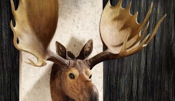 An in-depth guide to moose hunting