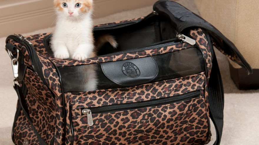 An in-depth guide to traveling with cats