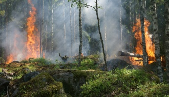 An in-depth review on how to protect yourself from forest fires.