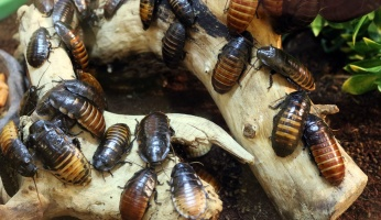 An in-depth guide on how to get rid of roaches