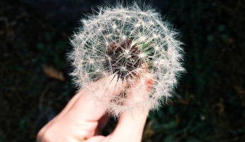 An in-depth review of home remedies for allergies.