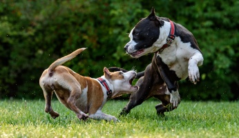 An in-depth guide on how to stop a dog from biting