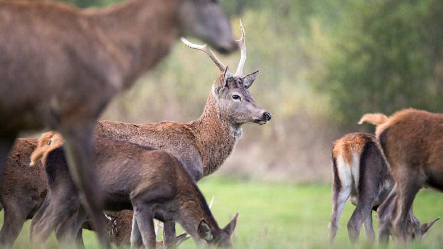Here's How Hunting And Wildlife Conservation Go Hand In Hand