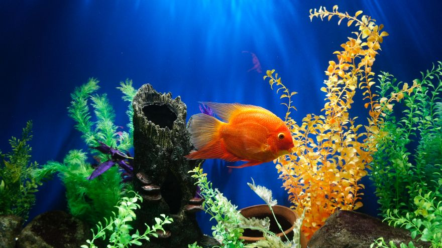 An in-depth review of aquarium decorations.