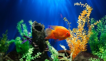 An in-depth review of your first fish tank.