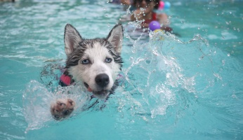 An in-depth guide on the benefits of hydrotherapy for dogs.