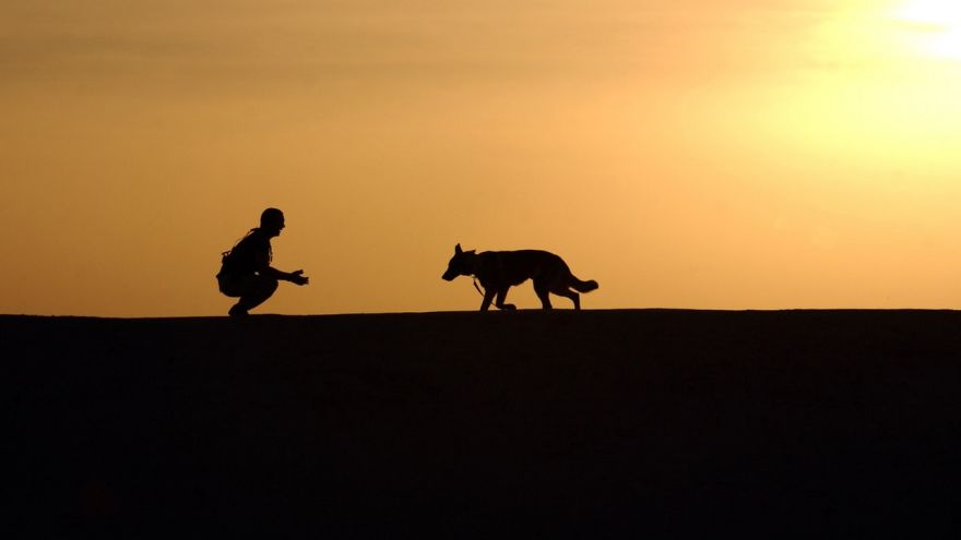 An in-depth guide on positive dog training.
