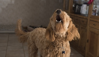 An in-depth guide on how to stop your dog from barking.