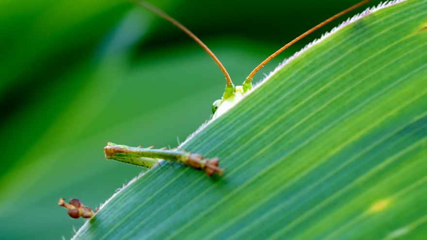 An in-depth review of how to deal with common garden pests.