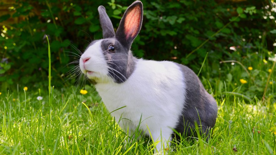 An in-depth review of pet rabbit supplies.