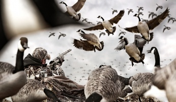 Best Tips to improve Hunting Trophy Photography