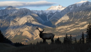 An in-depth review of guided elk hunts.