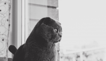 An in-depth guide on how to deal with cat anxiety.