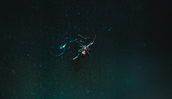 An in-depth review of the most dangerous spiders you should be aware of.
