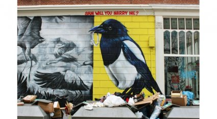 An in-depth review of how to protect yourself during the magpie swooping season in Australia.