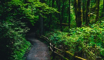 An in-depth review of Portland hikes.