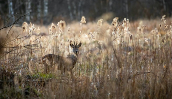 Things Every Public Land Hunter Should Know
