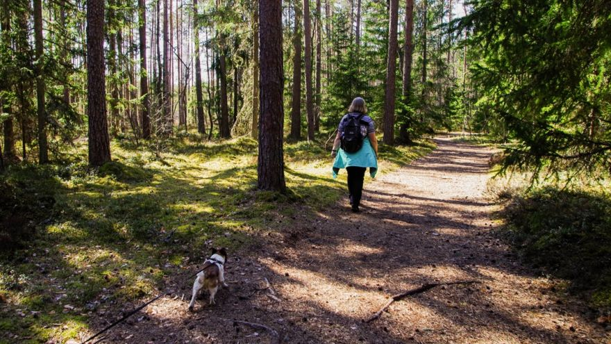 An in-depth guide full of the best tips for hiking with dogs.
