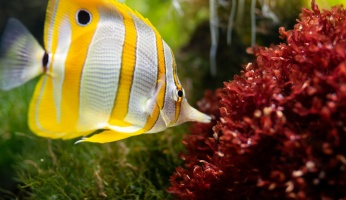 An in-depth guide on which saltwater aquarium fish are best for beginners.