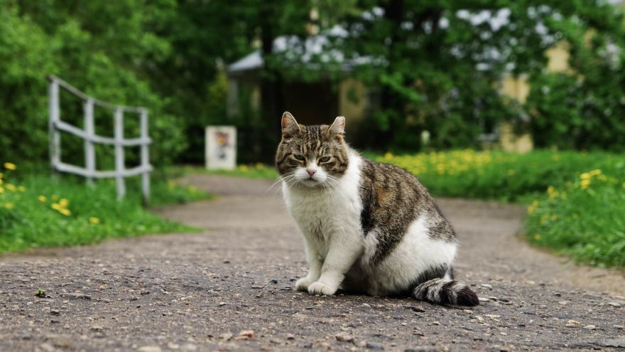 An in-depth guide on how to keep cats away from your home and garden.